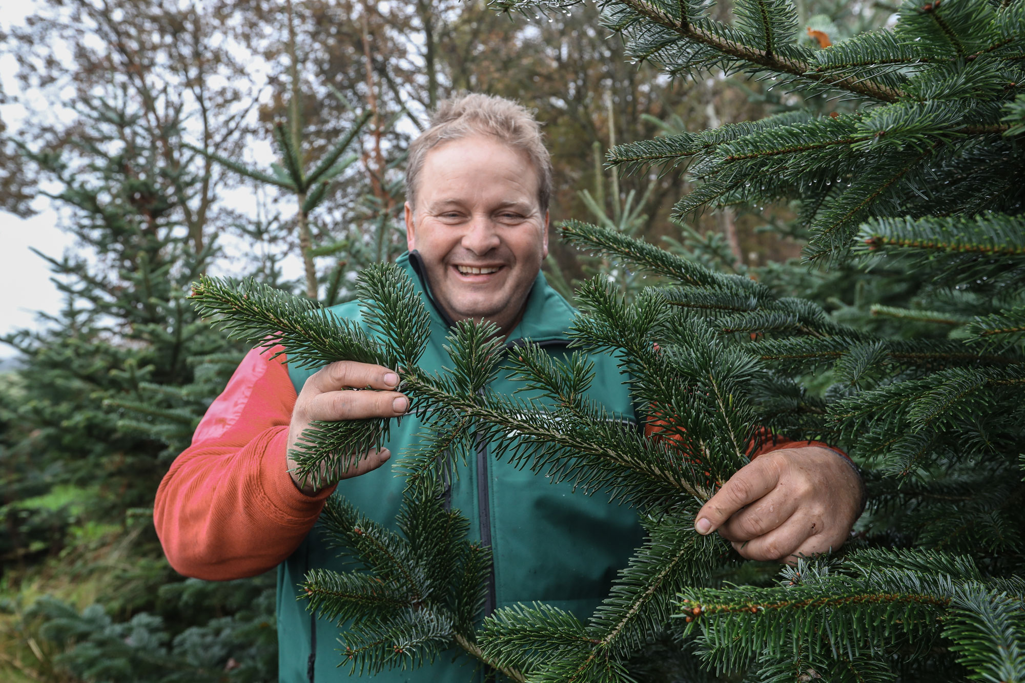 Weihnachtsbäume wie Nordmanntannen, Blaufichten & Nobilistannen für das Aller-Leine-Tal, den Heidekreis und Hannover